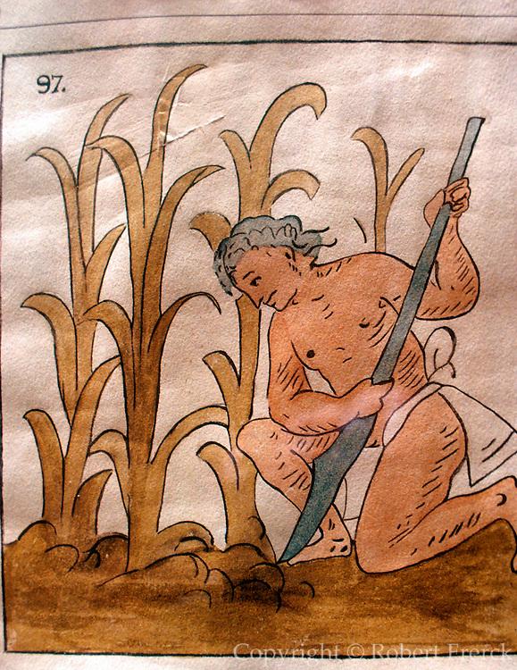 MEXICO, MEXICO CITY, MUSEUM PRE-COLUMBIAN Aztec planting corn