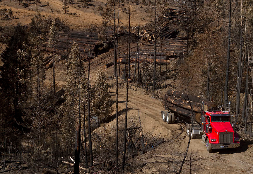 Trees killed during the Rim Fire near Cottonwood Road in Tuolumne County, California, are being transported to a Sierra Pacific Industries (SPI) lumber mill on Monday, October 14, 2013.