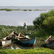 A woman carries water through thick water hyacinth encroaching on the banks of Lake Victoria. Pollution of the lake is causing water hyacinth to grow out of control and is a sign of the environmental problems affecting the lake.