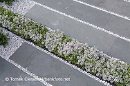Thyme, blue grass, grey slabs and white gravel