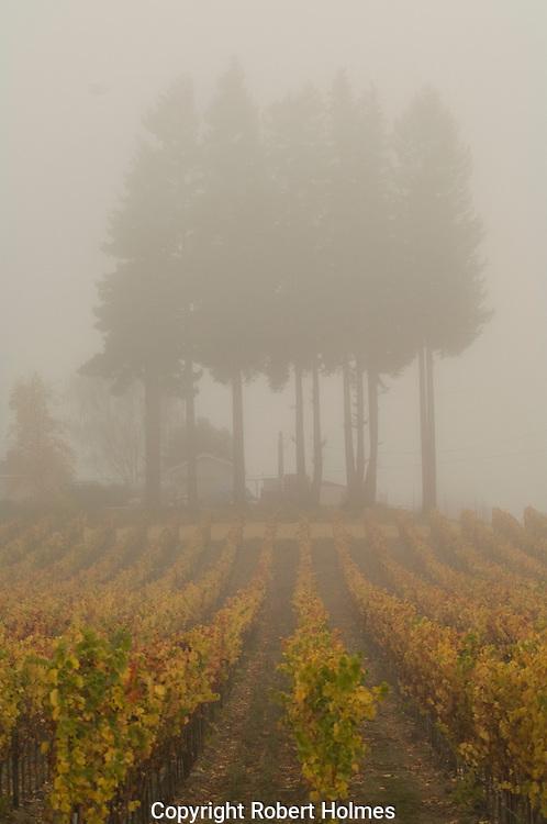 Fog in Russian River vineyards, Sonoma County, California