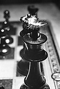 Caterpiller on the black chess piece on a chess board game