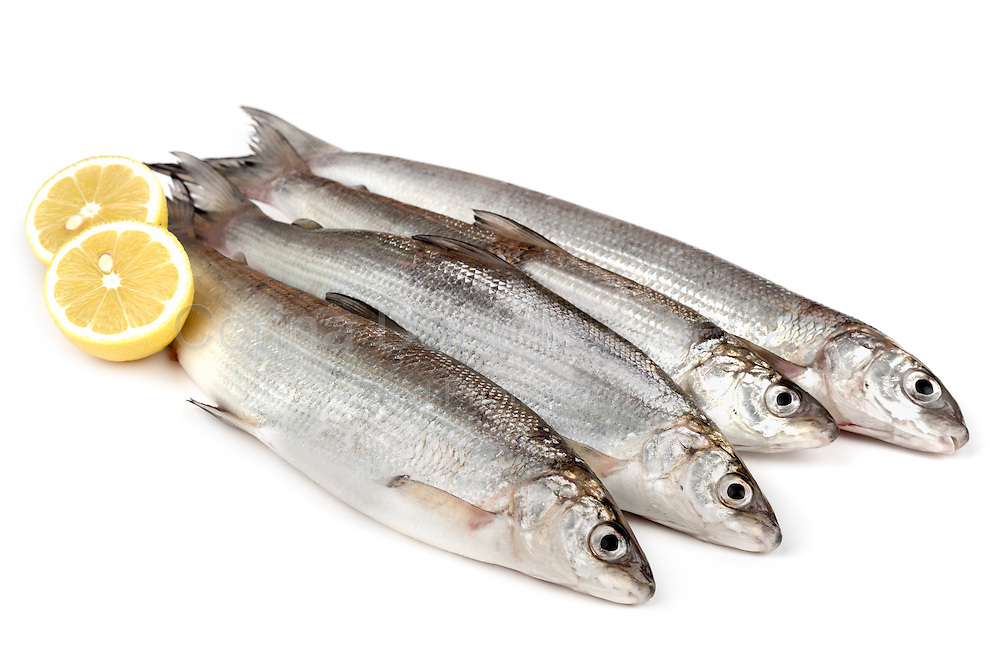 Raw European whitefish (Coregonus lavaretus) with lemon, isolated on white background.