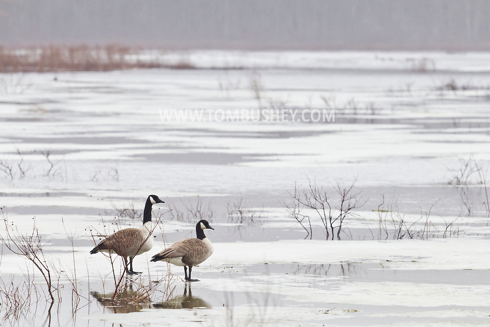 Mamakating, New York - Early spring scenes at the Bashakill Wildlife Management Area on  March 30, 2014.