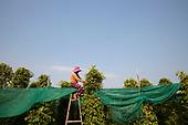Cambodia: Kampot Pepper