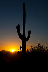 Silhouette of a giant Saguaro cactus (Carnegiea gigantea) at sunset, Saguaro National Park, Tucson, Arizona, United States of America
