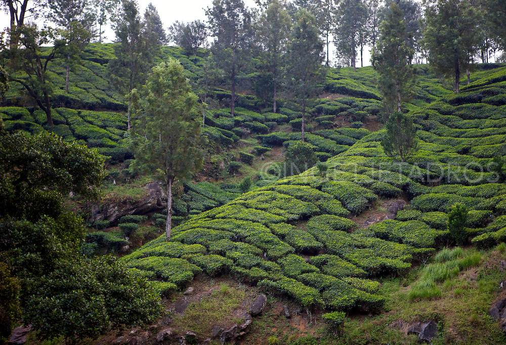 Munnar is one of the most popular hill stations in India.<br />