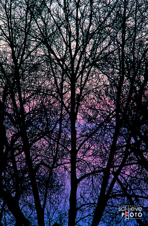 Purple sky after sunset.