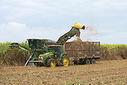 Cutting and harvesting sugarcane in the Fall at plantation along the Mississippi at Baldwin, Louisiana, USA