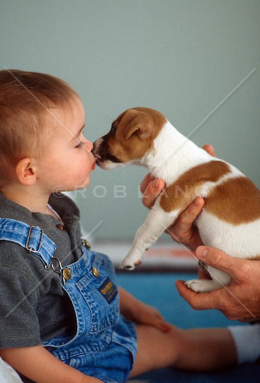 little boy kissing a Jack Russell puppy