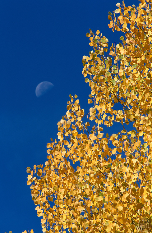 &quot;Autumn Moon 2&quot;- Photographed in the Tahoe Donner area of Truckee, CA, near the Equestrian Center.<br /> Photographed: October 2003