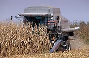 A combine harvester cuts corn stalks on a midwestern US farm.