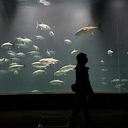 Tokyo, Japan December 2010. Tokyo Sea Life Park.