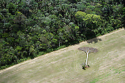 A fallen castanheira tree lies in a soy field cleared from Amazon rainforest outside of Santarem, Brazil, September, 2013. Castaña trees are protected from harvesting by Brazilian law.