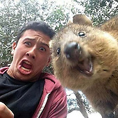 Quokka Selfie Is Cutest Trend