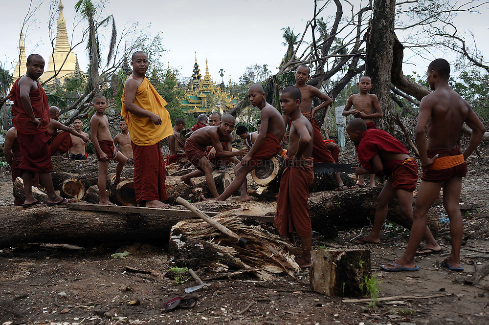 Buddhist monks cut uprooted trees into small pieces to clear the surroundings of the famous Shwedagon pagoda in Yangon on May 18, 2008. With a global food crisis in full swing, experts warn that the problems ahead could be enormous for Myanmar already reeling from the devastation of Cyclone Nargis which destroyed rice paddies, drowned buffaloes used for ploughing and ruined stocks of grain and seed.