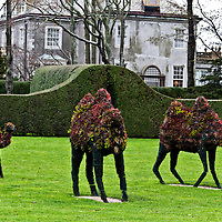 Topiary camels at Doris Duke mansion in Newport, Rhode Island
