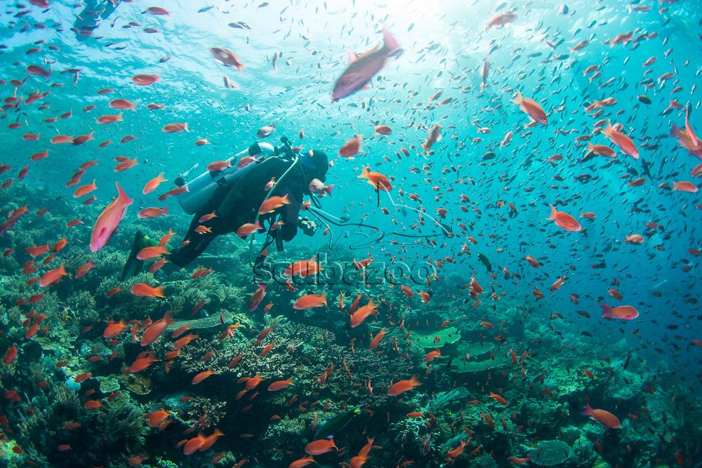 Diver swimming among school of fish, Komodo Island, Indonesia.