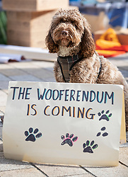 """© Licensed to London News Pictures. 07/10/2018. London, UK. Molly poses with a sign saying 'The Wooferendum is Coming' as pro-remain dog owners march to Parliament to demand a """"People's Vote"""" on the final Brexit agreement.  Photo credit: Peter Macdiarmid/LNP"""