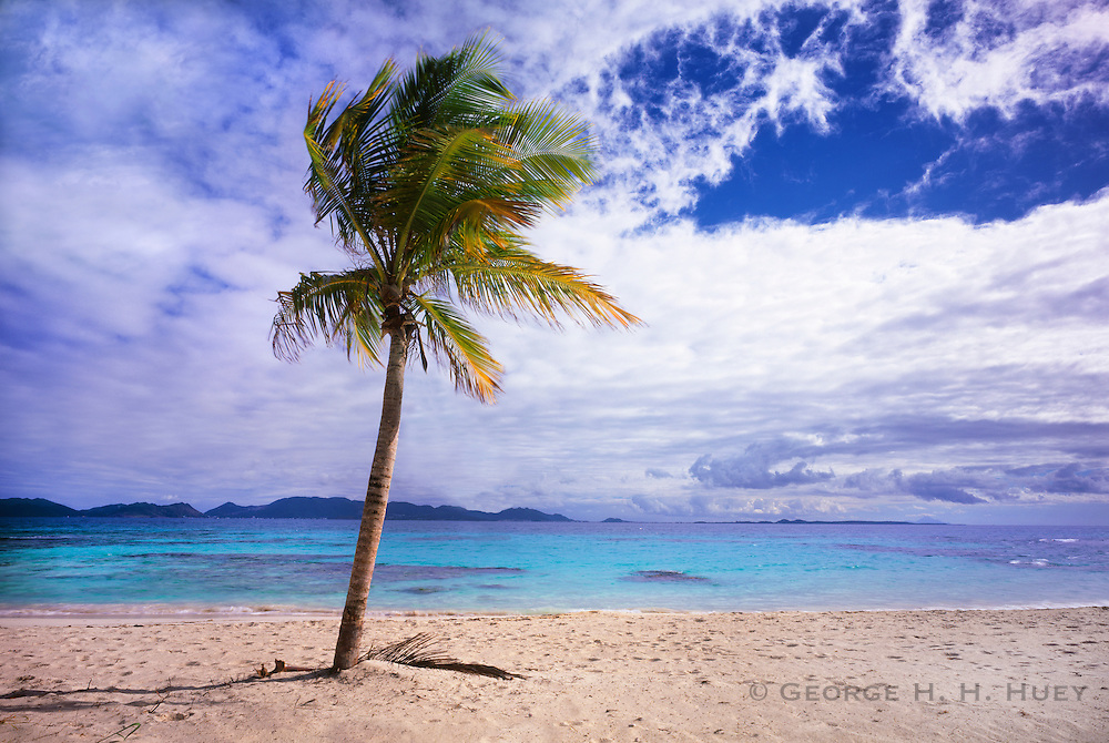 6207-1005 ~ Copyright: George H. H. Huey ~ Coconut palm tree [Cocos nucifera] and beach at Merrywing Bay, with island of St. Martin in distance.  Southwest coast, island of Anguilla, Leeward Islands, Lesser Antilles, Caribbean.