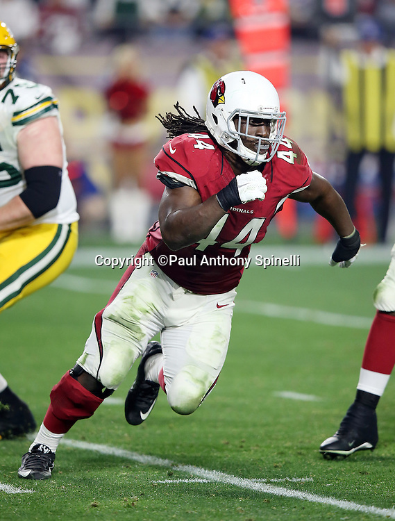 Arizona Cardinals outside linebacker Markus Golden (44) chases the action during the NFL NFC Divisional round playoff football game against the Green Bay Packers on Saturday, Jan. 16, 2016 in Glendale, Ariz. The Cardinals won the game in overtime 26-20. (©Paul Anthony Spinelli)