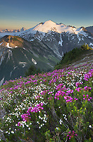 Ruth Mountain seen from wildflower meadows of Hennegan Peak, Mount Baker Wilderness North Cascades Washington
