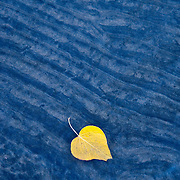 A single hello leaf on the bank of Lake Tahoe before a rain storm.