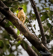 Osa, Costa Rica