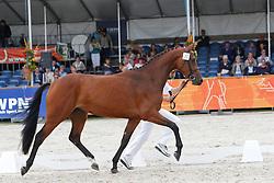 072 - Cabish<br /> KWPN Paardendagen Ermelo 2010<br /> © Dirk Caremans
