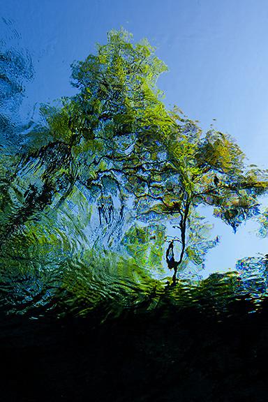 Water, underwater looking skyward through enviromentally clean, clear spring water.