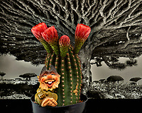 Troll with blooming barrel cactus. Indoor spring in New Jersey. Image taken with a Nikon Df camera and 105 mm f/2.8 VR macro lens (ISO 100, 105 mm, f/11, 1/30 sec) +SB-910 flash.