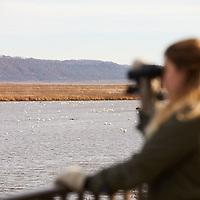 2017 UWL Fall Biogeography Tundra Swan Field Trip