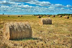 Fardos de feno nos campos de Uruguaiana. FOTO: Jefferson Bernardes/Preview.com