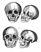 1: Germanic skull 'with all the marks of a European head'. 2: African skull: 'The arching of the forehead considered separately is by no means so stupid as the other parts evidently appear to be'. From JK Lavater 'Essays in Physiognomy'. Early 19th century edition.