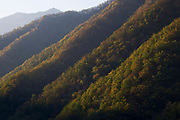Sunrise on steep forested slopes of Zhouzhi Nature Reserve, Qinling Mountains, Shaanxi, China.