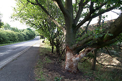 © Licensed to London News Pictures. 17/07/2017. Baxterley, North Warwickshire UK. Three people were killed in Baxterley, North Warwickshire when the BMW car they were in hit a tree. It is believed 2 18 year old males died along with a 19 year old female. Pictured, The Common, Baxterley where the acident took place.  Photo credit: Dave Warren/LNP
