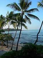 Close up of Palms on Bali Hai beach, Hawaii