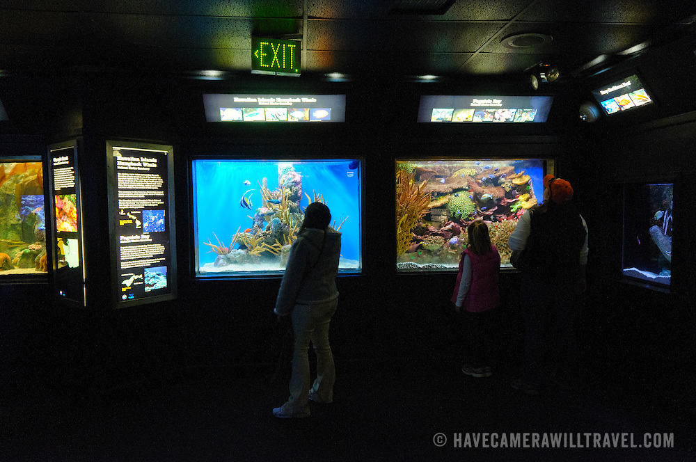 Visitors in front of tanks and exhibits at the National Aquarium in Washington DC. The National Aquarium is in the basement of the Department of Commerce Building, where it has been housed since 1932. Much smaller and less well known than its affiliated facility in Baltimore, Washington's National Aquarium consists of a series of tanks illustrated various types of marine environments, with special emphasis on the many marine sanctuaries in U.S. marine territory.