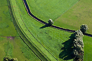 Nederland, Gelderland, Gemeente Brummen, 03-10-2010; Brummense bandijk (detail). De dijk, winterdijk, wordt op termijn verlaagd om rivier de IJssel een groter winterbed te geven. Dijkverlegging Cortenoever in het kader van Ruimte voor de Rivier..Brummen Bandijk (detail). The winter dike, is eventually reduced in height to create a larger floodplain for the river IJssel. Part of the program shifting the Cortenoever dike..luchtfoto (toeslag), aerial photo (additional fee required).foto/photo Siebe Swart