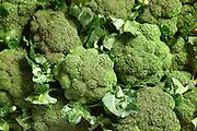 Group of Broccoli