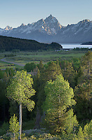 Grand Teton ( 13770ft<br /> 4197m) seen from near Oxbow Bend, Grand Teton National Park Wyoming