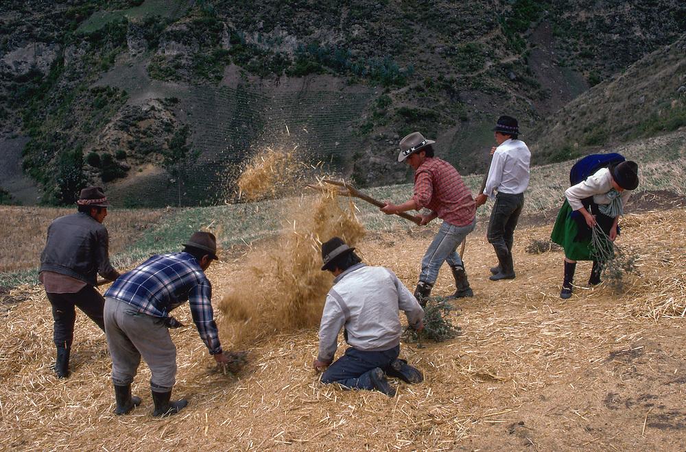 Barley Harvest --- Image by © Jeremy Horner/CORBIS