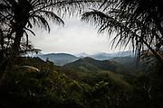 La chaine centrale du nord de la Grande-Terre vu à travers des palmes de cocotiers. Nouvelle Calédonie 2013