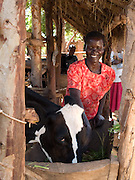 Akia Joyce with the cow she received from Send a Cow. Joyce is a member of Aliast A Jerusalem group, part of Send a Cow, Uganda. The skills she has learnt have transformed her life. Her husband was inspired by her efforts and is now also receiving training too. Together they grow enough food to feed their family a balanced diet, with enough surplus to sell at market. There recent orange tree grafting is turning in to a profitble business.