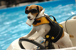 Duma, a seven-year-old Jack Russell terrier, stands on a remotely controlled boat at the 2013 Vancouver International Boat Show at BC Place in Vancouver, Canada,  February 7, 2013. Photo by Imago / i-Images...UK ONLY