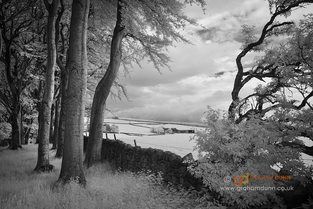 A glimpse of dramatic skies and farm buildings through a row of trees on Edge Road, Eyam, Peak District. Infrared capture in Derbyshire, England, UK. June, 2016.