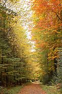 Europa, Deutschland, Nordrhein-Westfalen, Herbst im Wald am Ruhrhoehenweg im Ardeygebirge bei Herdecke...Europe, Germany, North Rhine-Westphalia, autumn in a forest at the Ruhrhoehenweg in the Ardey mountains near Herdecke.