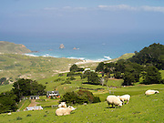 High-angle view of Sandfly Beach and Bay, from Highcliff Road, on the Otago Peninsula, near Dunedin, Otago, New Zealand