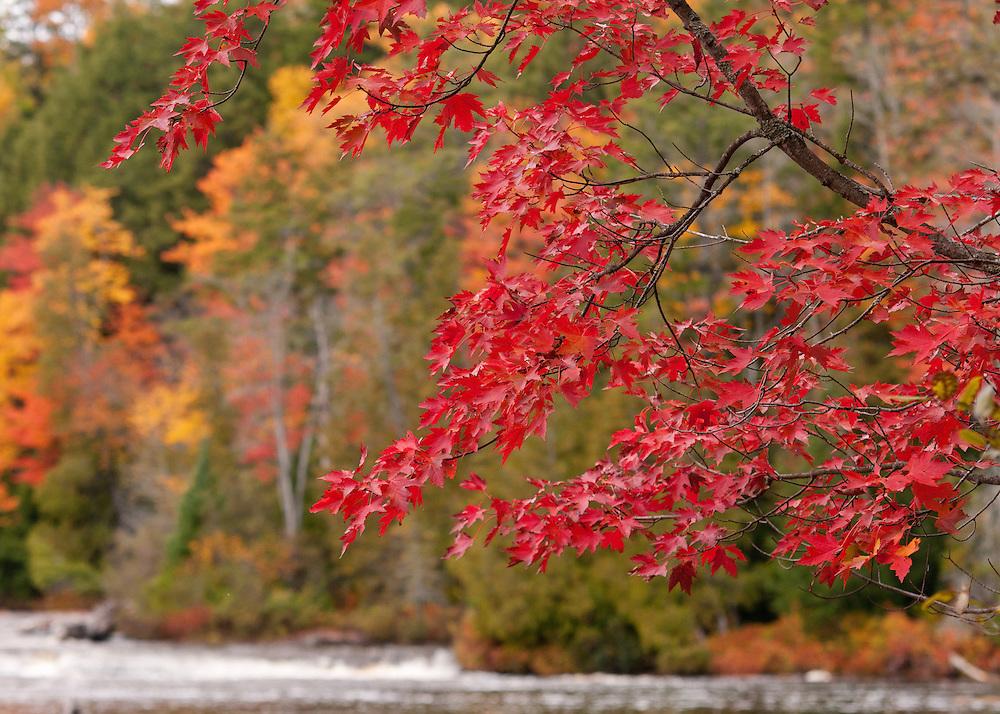 Tahquamenon River,<br /> Michigan's Upper Peninsula