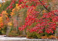 Tahquamenon River,<br />